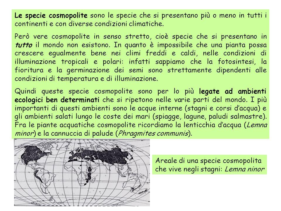 Le specie cosmopolite sono le specie che si presentano più o meno in tutti i continenti e con diverse condizioni climatiche. Però vere cosmopolite in