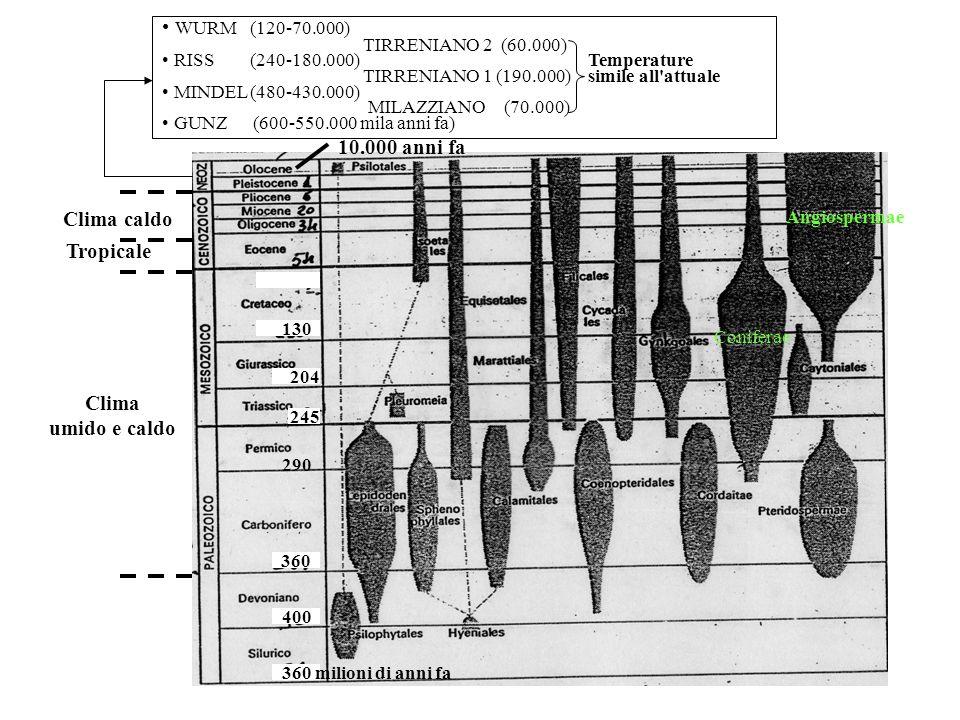 Clima umido e caldo Tropicale 10.000 anni fa Clima caldo WURM (120-70.000) TIRRENIANO 2 (60.000) RISS (240-180.000) Temperature TIRRENIANO 1 (190.000) simile all attuale MINDEL (480-430.000) MILAZZIANO (70.000) GUNZ (600-550.000 mila anni fa) Angiospermae Coniferae 360 milioni di anni fa 400 360 290 245 204 130