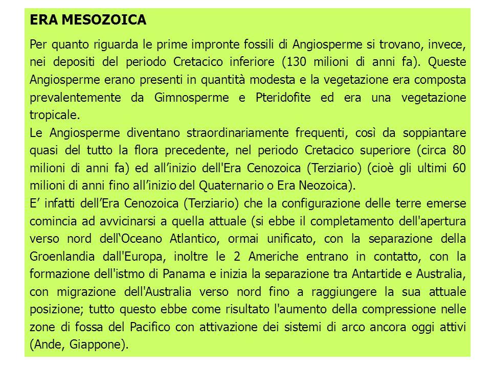 ERA MESOZOICA Per quanto riguarda le prime impronte fossili di Angiosperme si trovano, invece, nei depositi del periodo Cretacico inferiore (130 milioni di anni fa).