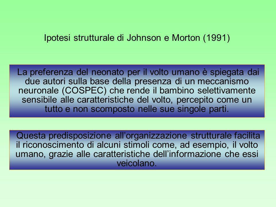 Ipotesi strutturale di Johnson e Morton (1991) La preferenza del neonato per il volto umano è spiegata dai due autori sulla base della presenza di un meccanismo neuronale (COSPEC) che rende il bambino selettivamente sensibile alle caratteristiche del volto, percepito come un tutto e non scomposto nelle sue singole parti.