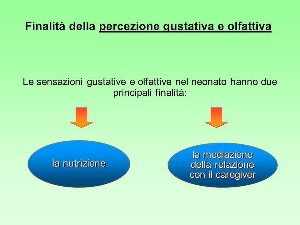 Finalità della percezione gustativa e olfattiva Le sensazioni gustative e olfattive nel neonato hanno due principali finalità: la nutrizione la mediazione della relazione con il caregiver
