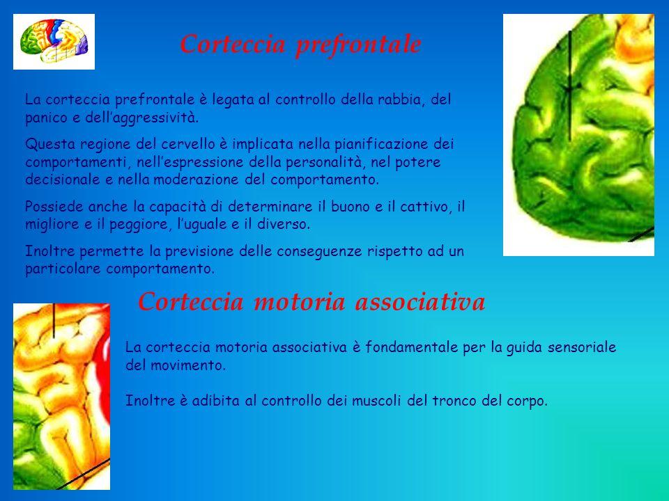 Corteccia prefrontale Corteccia motoria associativa Corteccia motoria primaria Corteccia somatosensitiva Corteccia visiva Area di Wernicke Corteccia uditiva Area di Broca