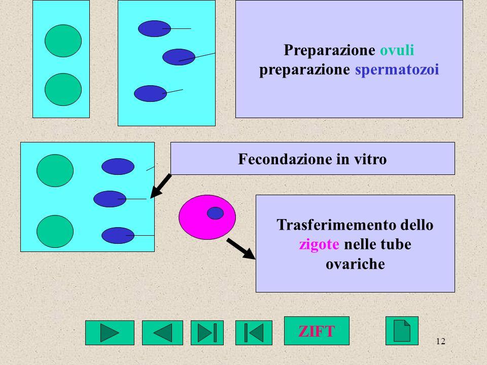 12 Preparazione ovuli preparazione spermatozoi Fecondazione in vitro Trasferimemento dello zigote nelle tube ovariche ZIFT