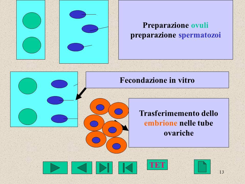13 Preparazione ovuli preparazione spermatozoi Fecondazione in vitro Trasferimemento dello embrione nelle tube ovariche TET