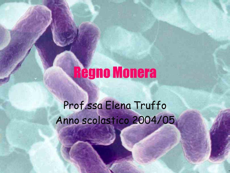 Regno Monera Prof.ssa Elena Truffo Anno scolastico 2004/05