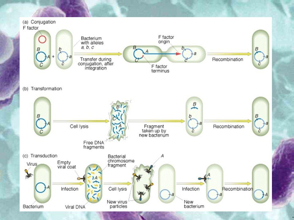 Batteri e malattie Sono note circa 200 specie di batteri patogeni, responsabili di numerose malattie dell uomo.