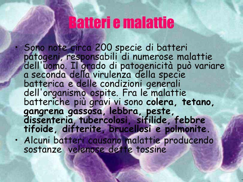 Batteri e malattie Sono note circa 200 specie di batteri patogeni, responsabili di numerose malattie dell'uomo. Il grado di patogenicità può variare a