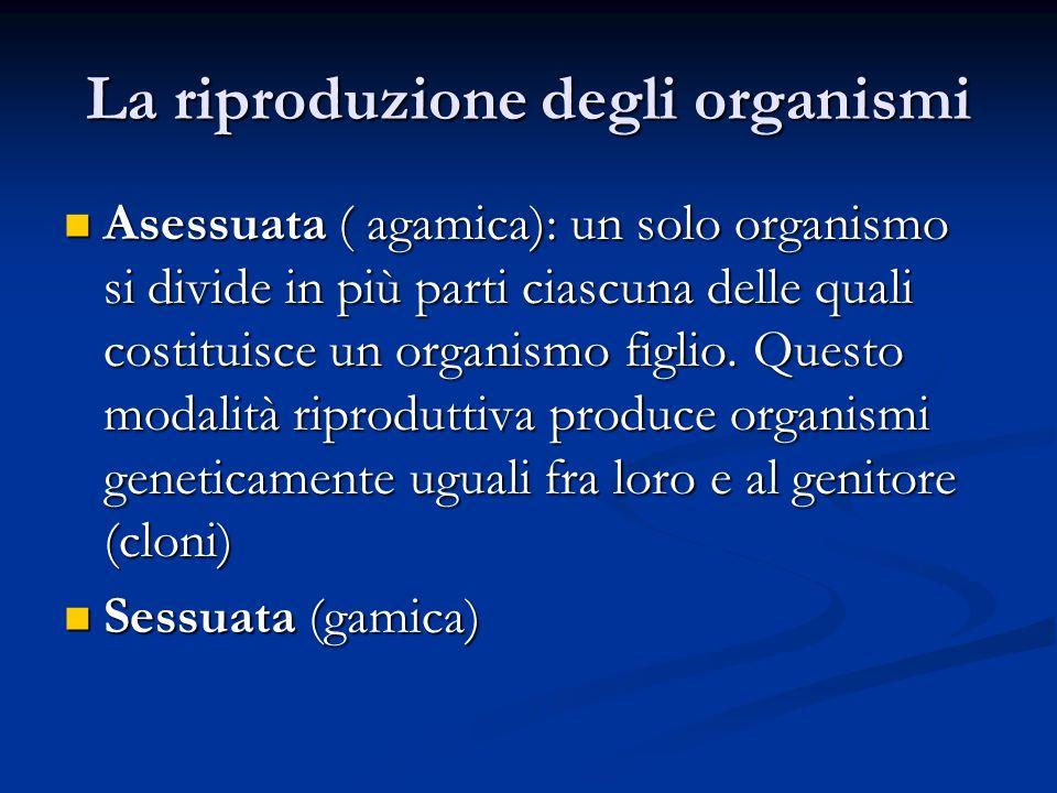 La riproduzione degli organismi Asessuata ( agamica): un solo organismo si divide in più parti ciascuna delle quali costituisce un organismo figlio. Q