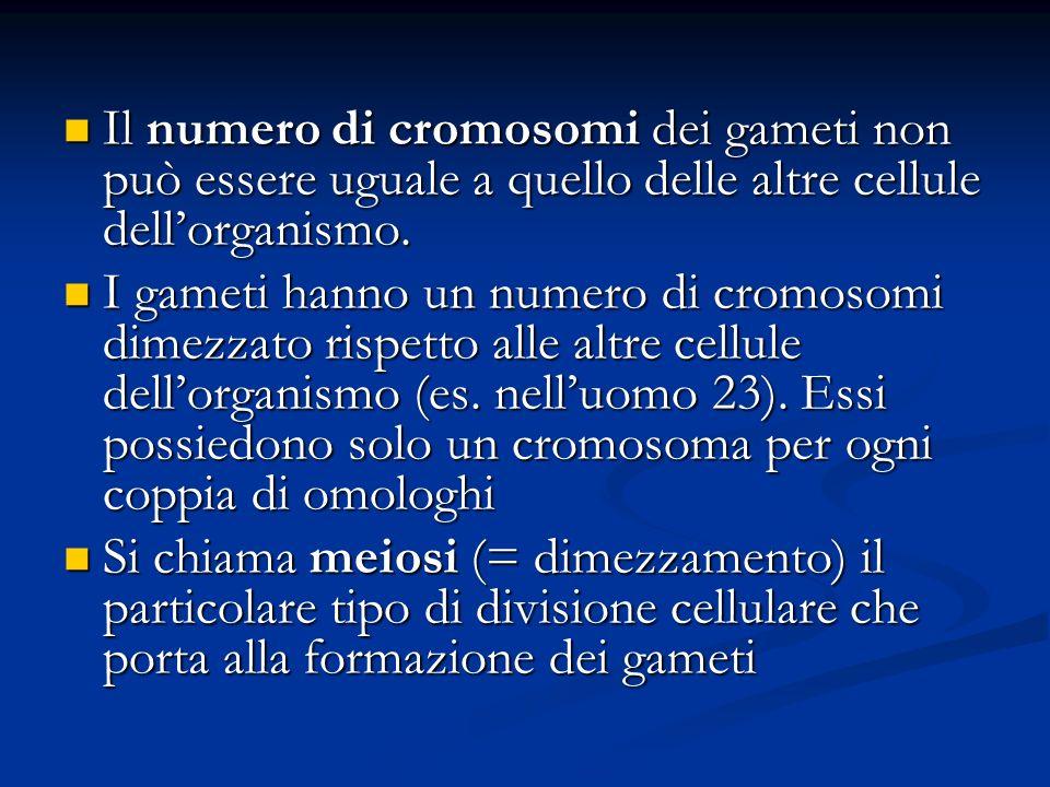 Il numero di cromosomi dei gameti non può essere uguale a quello delle altre cellule dellorganismo. Il numero di cromosomi dei gameti non può essere u