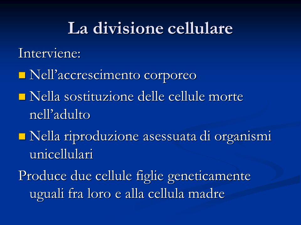 La divisione cellulare Interviene: Nellaccrescimento corporeo Nellaccrescimento corporeo Nella sostituzione delle cellule morte nelladulto Nella sosti