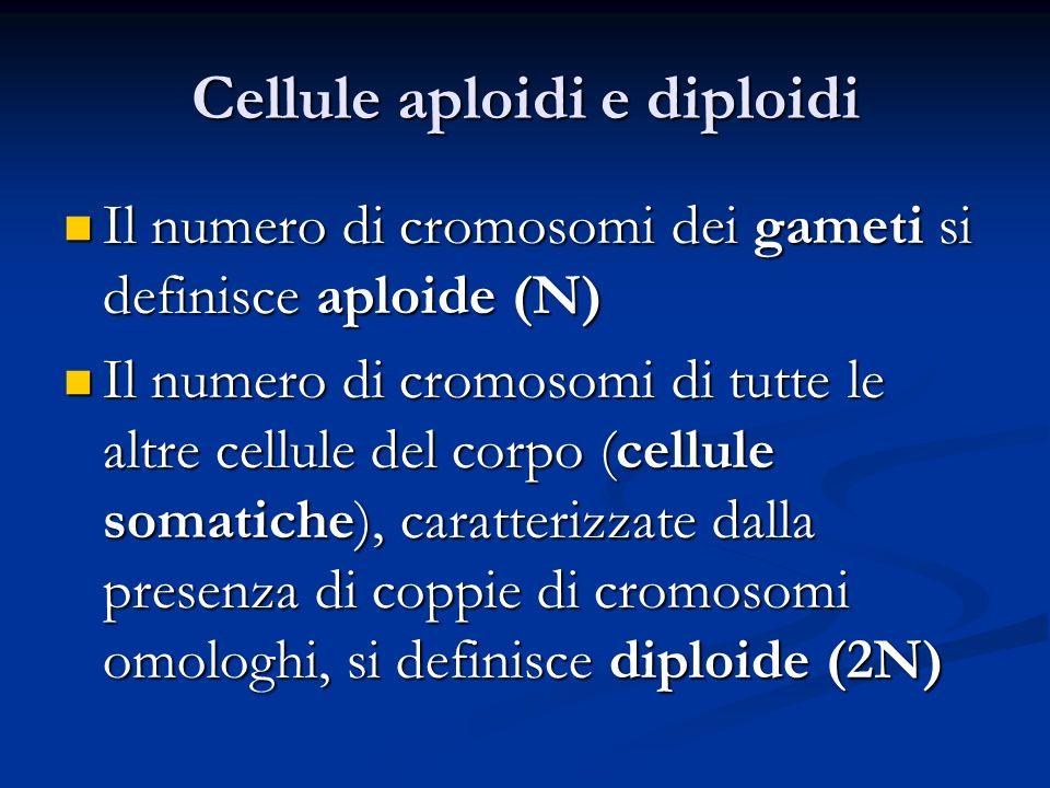 Cellule aploidi e diploidi Il numero di cromosomi dei gameti si definisce aploide (N) Il numero di cromosomi dei gameti si definisce aploide (N) Il nu