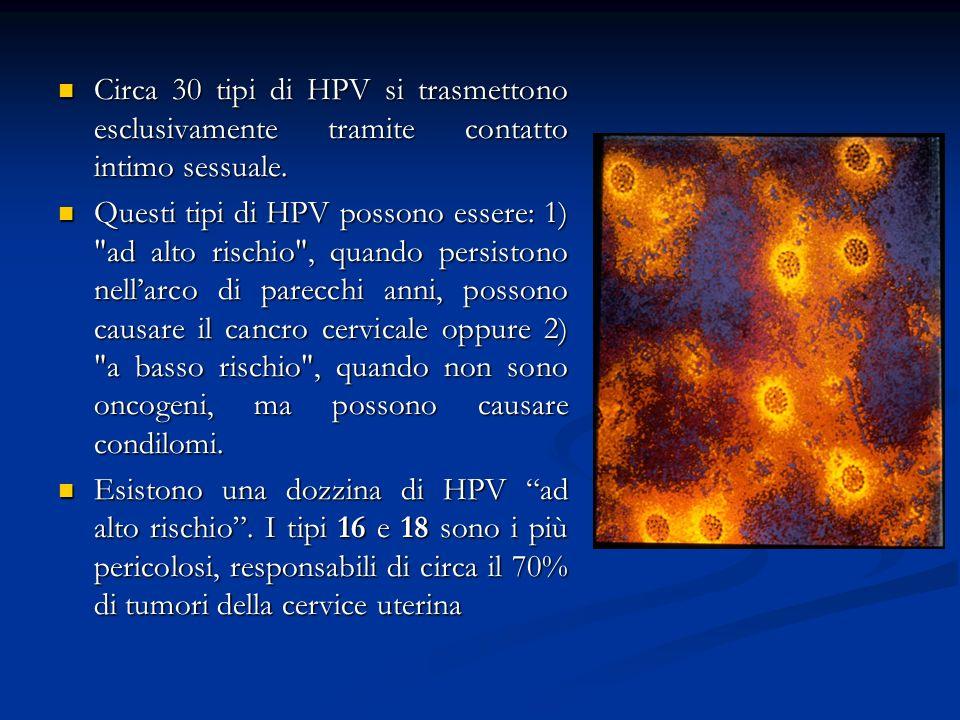 Circa 30 tipi di HPV si trasmettono esclusivamente tramite contatto intimo sessuale. Circa 30 tipi di HPV si trasmettono esclusivamente tramite contat