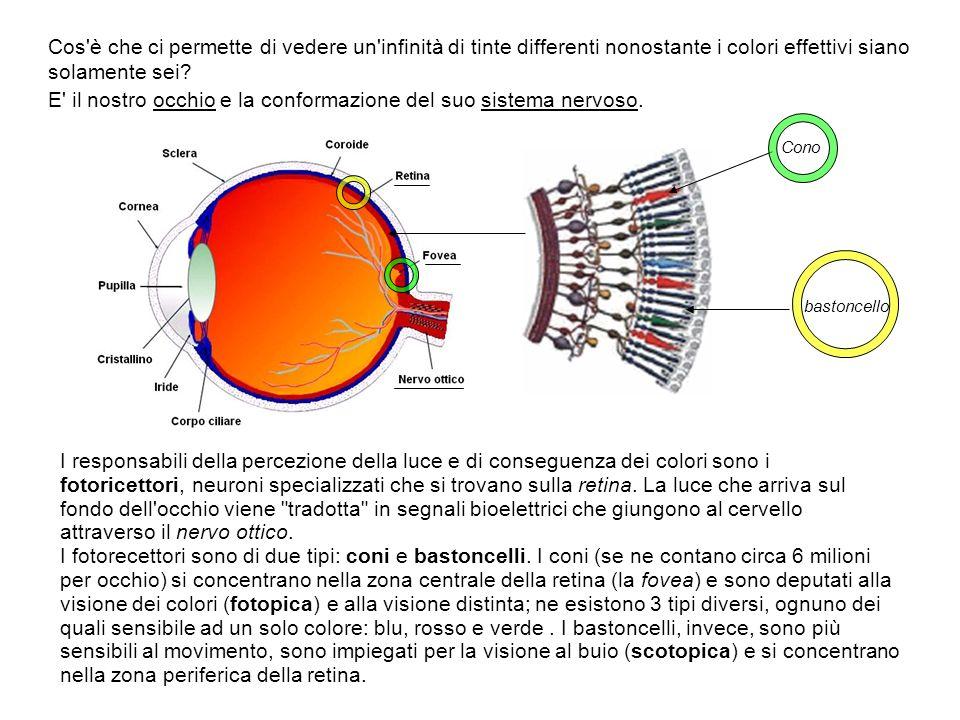 Cos'è che ci permette di vedere un'infinità di tinte differenti nonostante i colori effettivi siano solamente sei? E' il nostro occhio e la conformazi