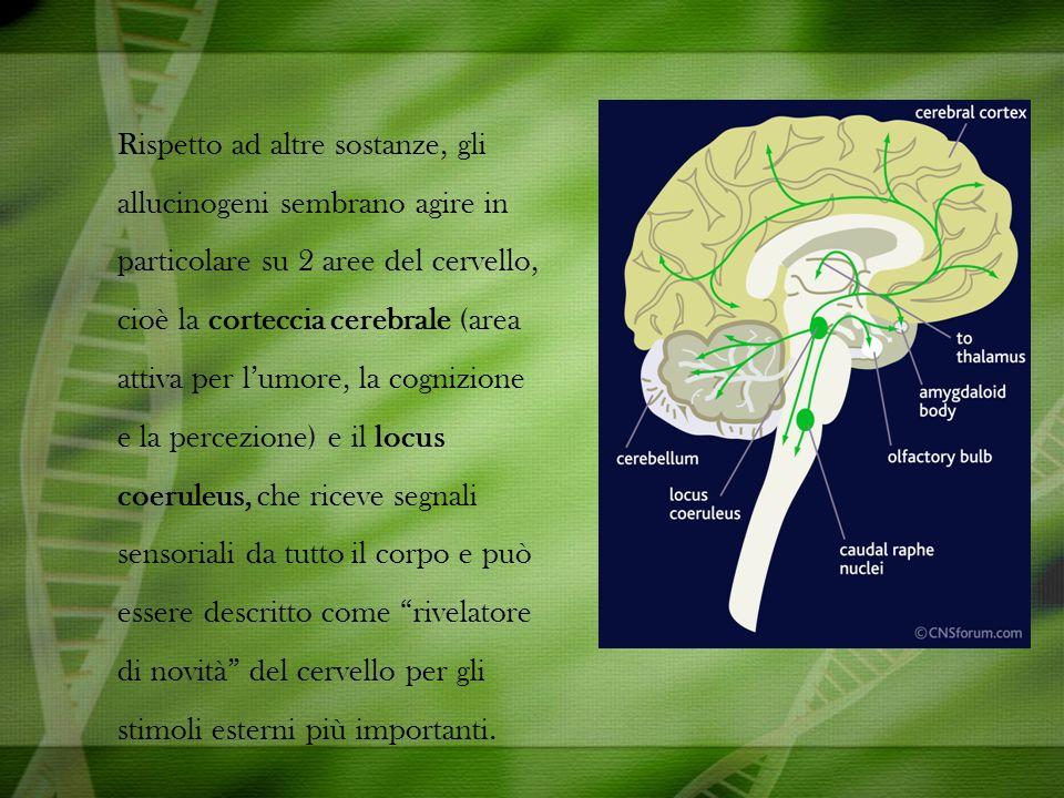 Rispetto ad altre sostanze, gli allucinogeni sembrano agire in particolare su 2 aree del cervello, cioè la corteccia cerebrale (area attiva per lumore, la cognizione e la percezione) e il locus coeruleus, che riceve segnali sensoriali da tutto il corpo e può essere descritto come rivelatore di novità del cervello per gli stimoli esterni più importanti.