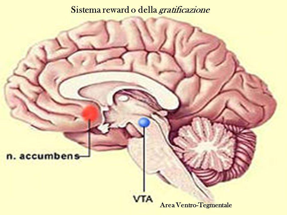 Area Ventro-Tegmentale Sistema reward o della gratificazione