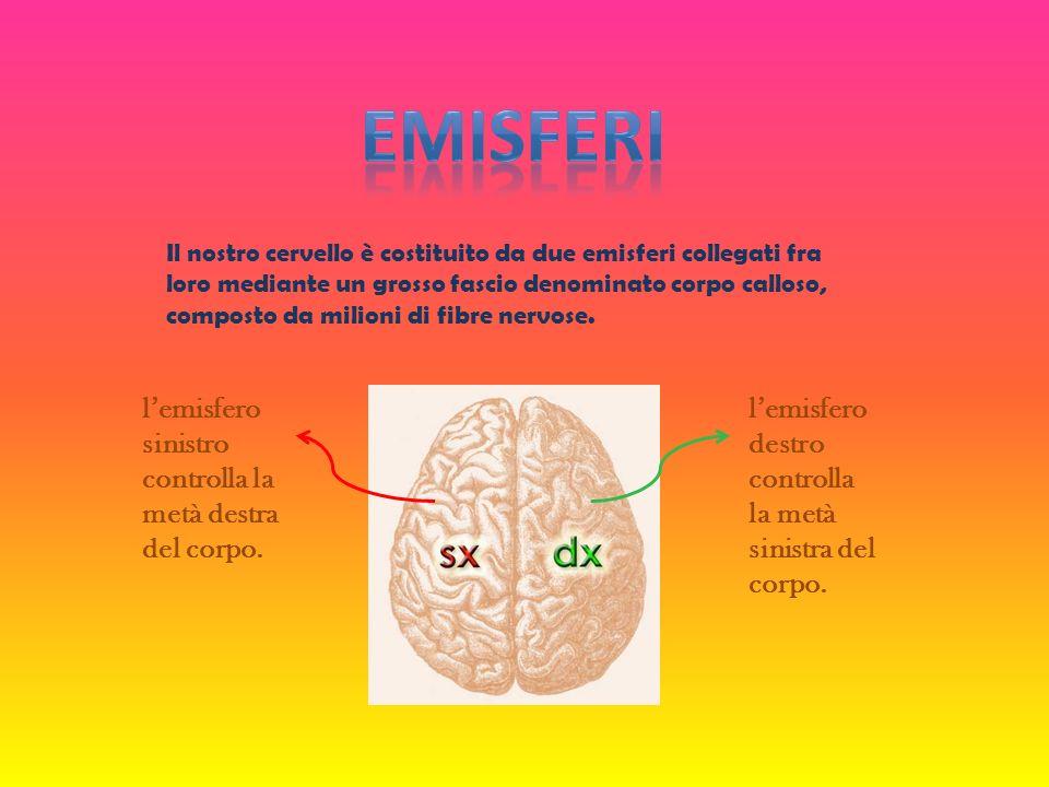 Il nostro cervello è costituito da due emisferi collegati fra loro mediante un grosso fascio denominato corpo calloso, composto da milioni di fibre ne