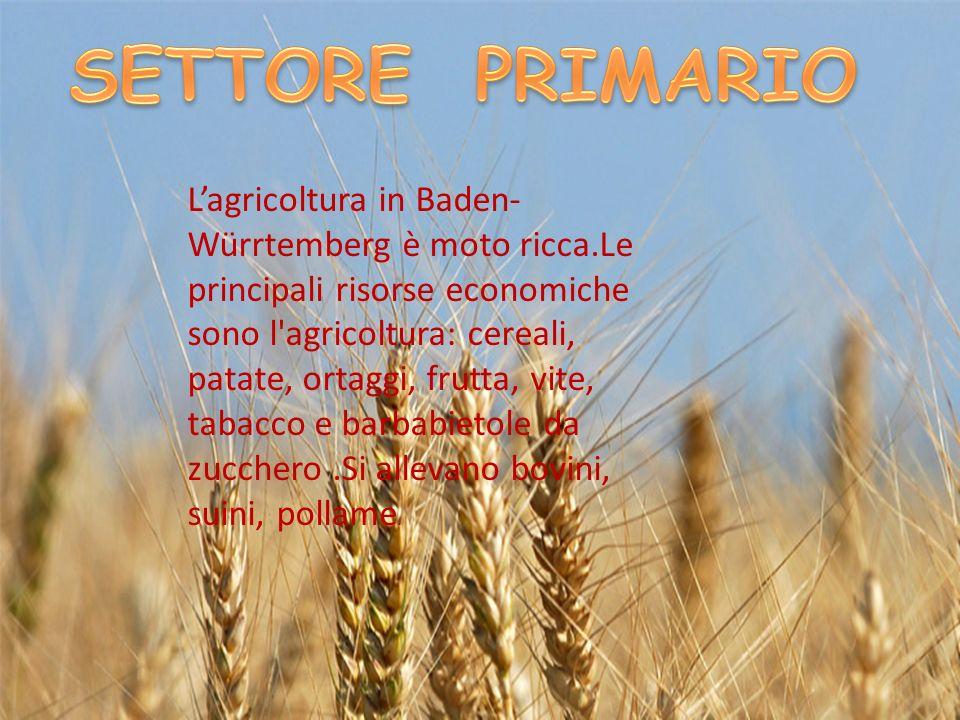 Lagricoltura in Baden- Würrtemberg è moto ricca.Le principali risorse economiche sono l'agricoltura: cereali, patate, ortaggi, frutta, vite, tabacco e