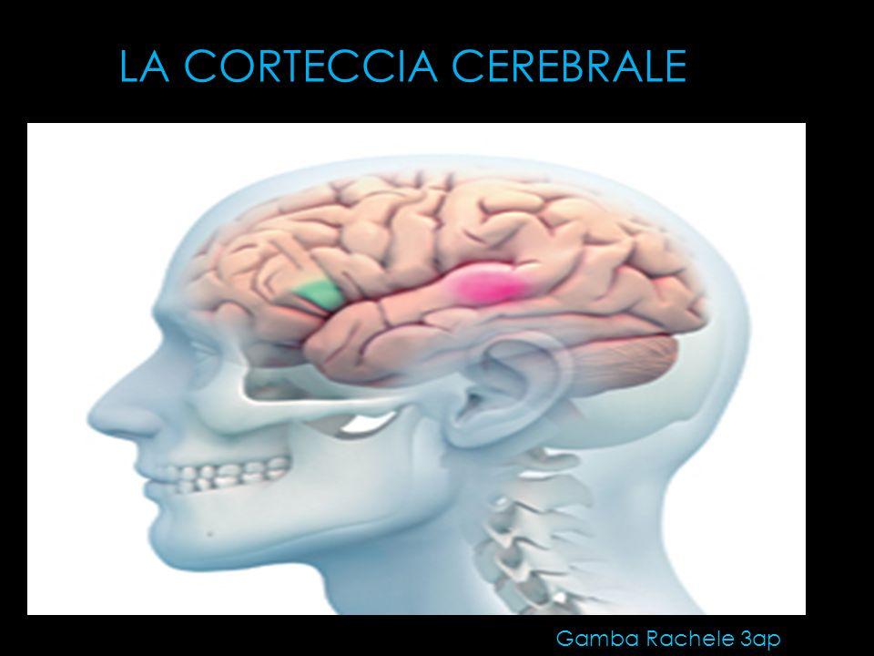 L area di Wernicke è una parte dell emisfero sinistro del cervello le cui funzioni sono coinvolte nella elaborazione e comprensione del linguaggio.emisfero sinistro cervellolinguaggio APPROFONDIMENTO: Fa parte della corteccia cerebrale,corteccia cerebrale ed è connessa all area di Brocaarea di Broca Prende il nome da Carl Wernicke, che nel 1874 scoprì che un danno a quest area causava un tipo particolare di afasiaCarl Wernicke1874afasia