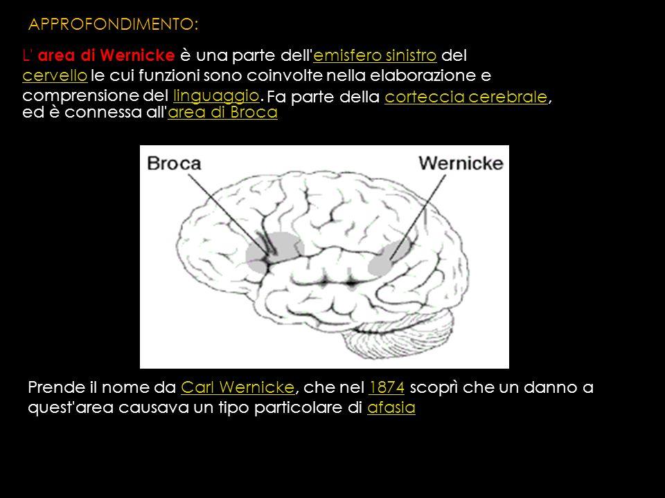 L' area di Wernicke è una parte dell'emisfero sinistro del cervello le cui funzioni sono coinvolte nella elaborazione e comprensione del linguaggio.em