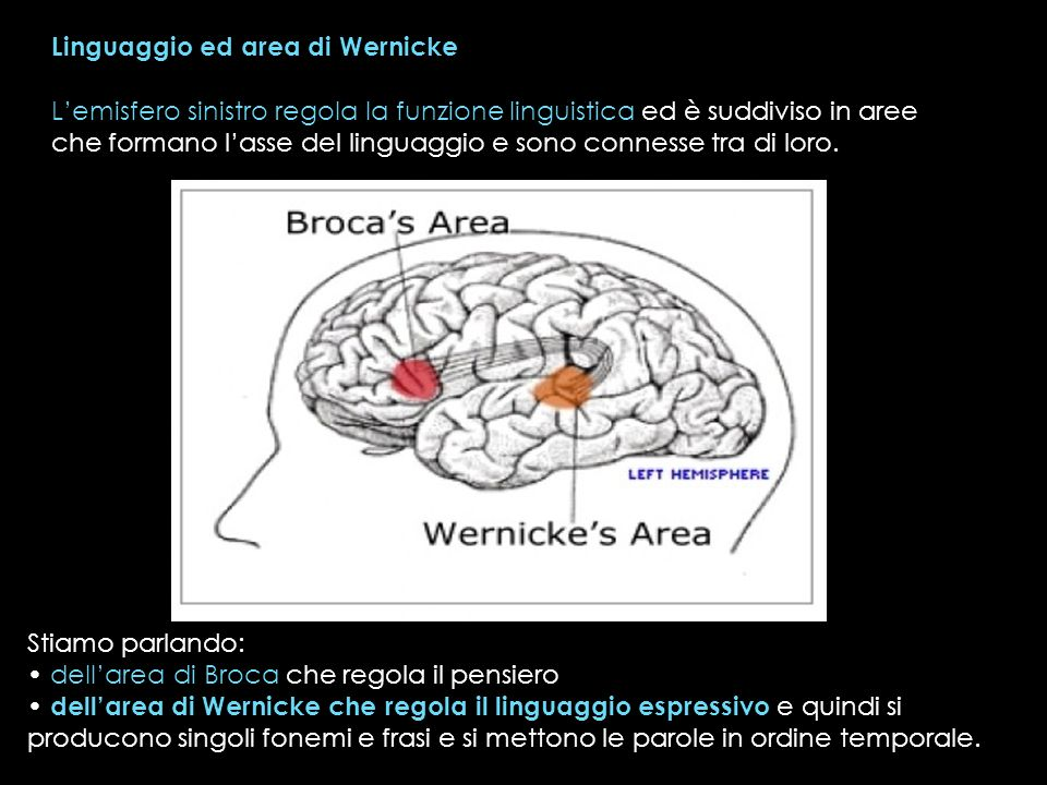 Linguaggio ed area di Wernicke Lemisfero sinistro regola la funzione linguistica ed è suddiviso in aree che formano lasse del linguaggio e sono connes