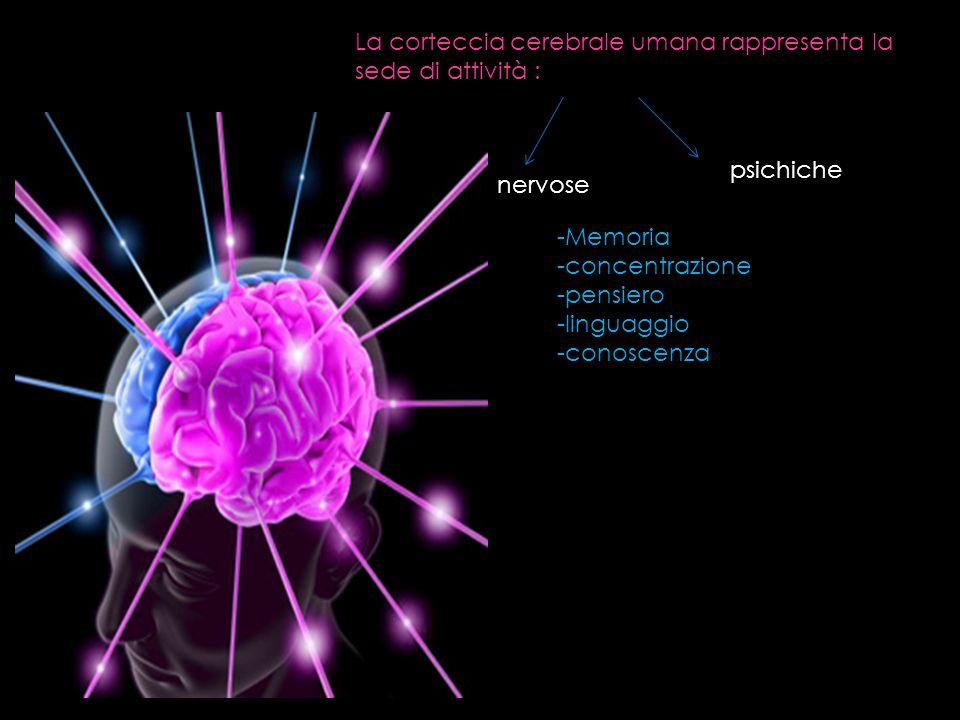 La corteccia cerebrale umana rappresenta la sede di attività : -Memoria -concentrazione -pensiero -linguaggio -conoscenza nervose psichiche