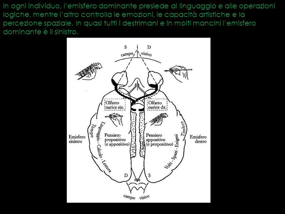 In ogni individuo, lemisfero dominante presiede al linguaggio e alle operazioni logiche, mentre laltro controlla le emozioni, le capacità artistiche e