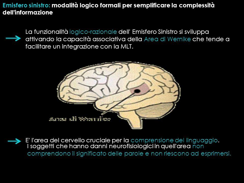 Emisfero sinistro: modalità logico formali per semplificare la complessità dell'informazione La funzionalità logico-razionale dell' Emisfero Sinistro