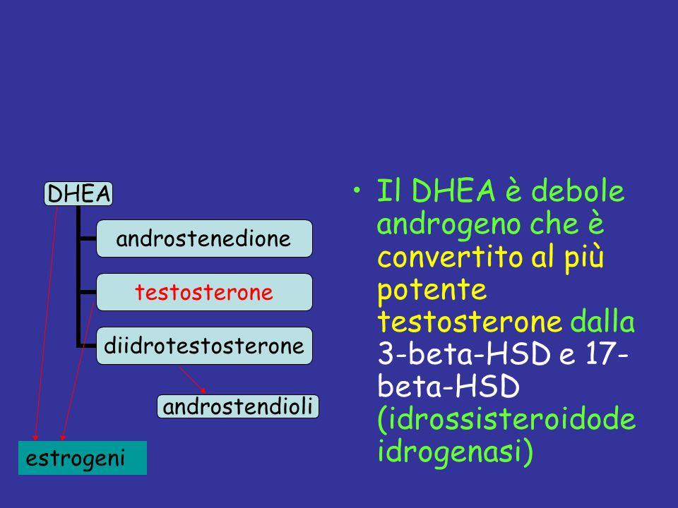 Il DHEA è debole androgeno che è convertito al più potente testosterone dalla 3-beta-HSD e 17- beta-HSD (idrossisteroidode idrogenasi) androstendioli estrogeni