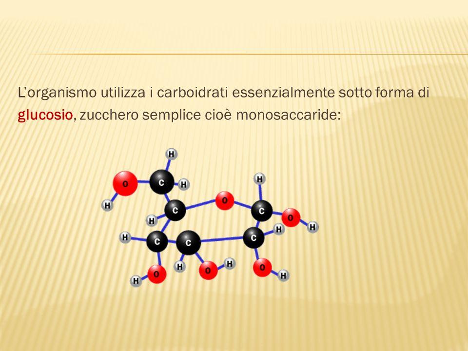 Lorganismo utilizza i carboidrati essenzialmente sotto forma di glucosio, zucchero semplice cioè monosaccaride: