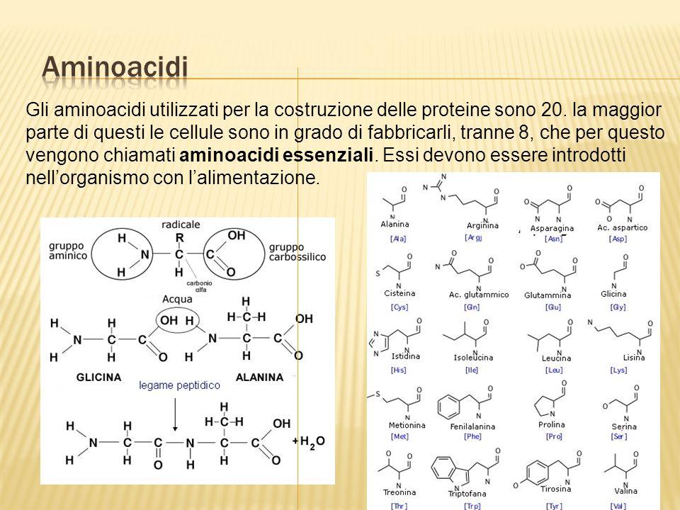 Gli aminoacidi utilizzati per la costruzione delle proteine sono 20.