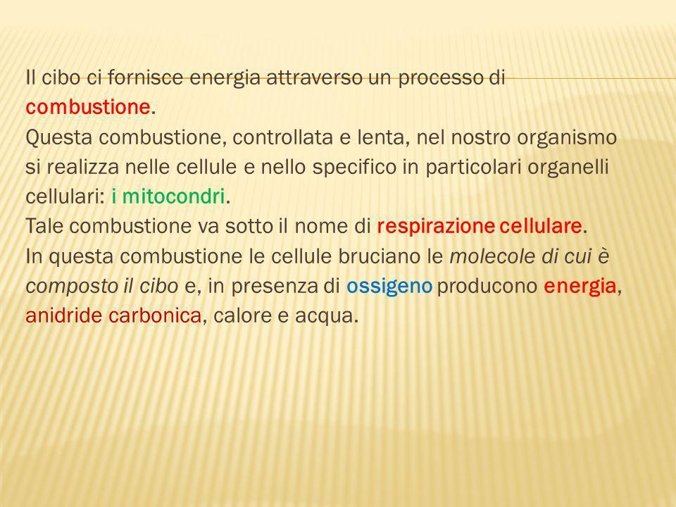 Lunità di misura dellenergia contenuta nel cibo è la CALORIA o piccola caloria (cal).