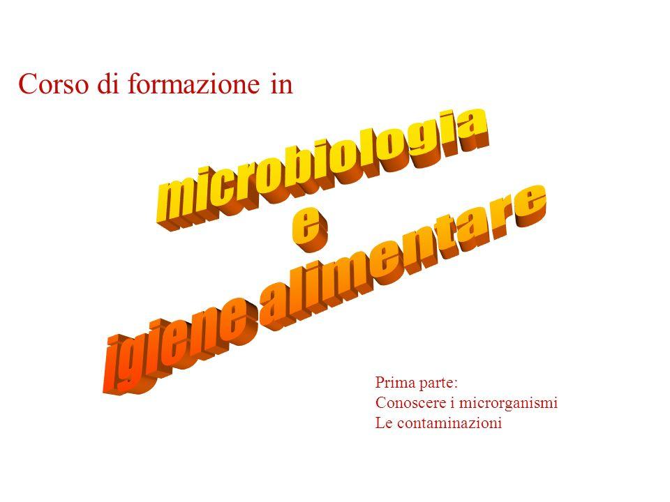 Moltiplicazione dei batteri 1 2 4 8 16 32 I batteri si moltiplicano ogni 20 minuti circa A partire da un batterio in 6 ore si ottiene la popolazione di Roma A partire da un batterio in 9 ore si ottiene la popolazione dellItalia