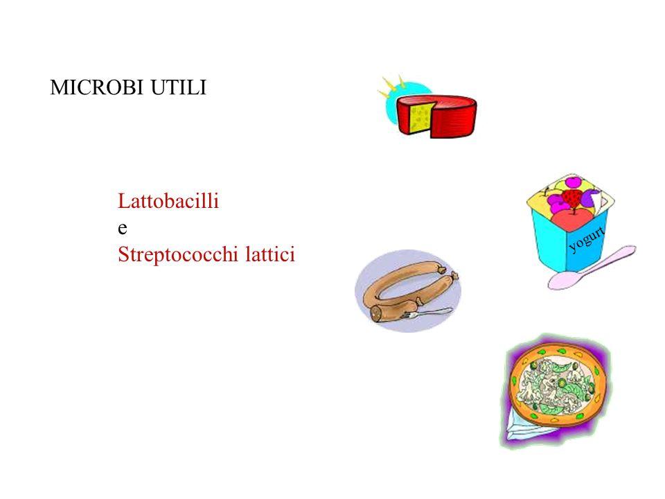 16 microbi utili lieviti e muffe slide 17 microbi neutri aria mani