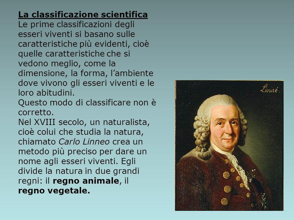 La classificazione scientifica Le prime classificazioni degli esseri viventi si basano sulle caratteristiche più evidenti, cioè quelle caratteristiche