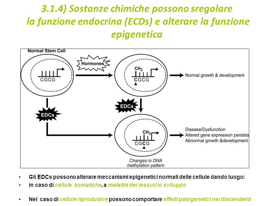 3.1.4) Sostanze chimiche possono sregolare la funzione endocrina (ECDs) e alterare la funzione epigenetica Gli EDCs possono alterare meccanismi epigenetici normali delle cellule dando luogo: in caso di cellule somatiche, a malattie dei tessuti in sviluppo Nel caso di cellule riproduttive possono comportare effetti patogenetici nei discendenti