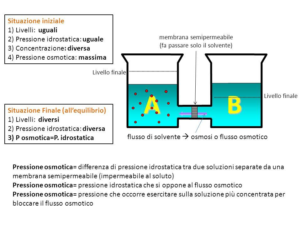flusso di solvente osmosi o flusso osmotico membrana semipermeabile (fa passare solo il solvente) A B Livello finale Situazione iniziale 1) Livelli: uguali 2) Pressione idrostatica: uguale 3) Concentrazione: diversa 4) Pressione osmotica: massima Situazione Finale (allequilibrio) 1) Livelli: diversi 2) Pressione idrostatica: diversa 3) P osmotica=P.