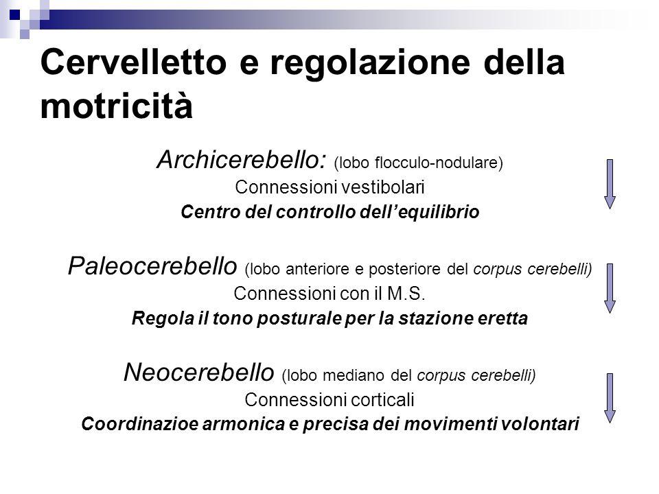 Cervelletto e regolazione della motricità Archicerebello: (lobo flocculo-nodulare) Connessioni vestibolari Centro del controllo dellequilibrio Paleoce