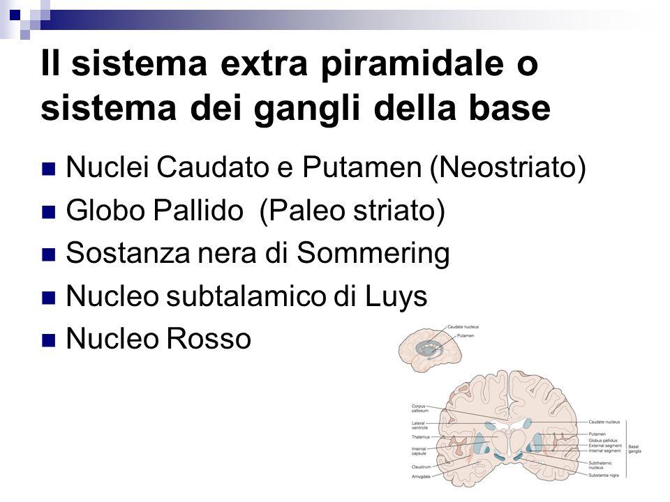 Il sistema extra piramidale o sistema dei gangli della base Nuclei Caudato e Putamen (Neostriato) Globo Pallido (Paleo striato) Sostanza nera di Somme