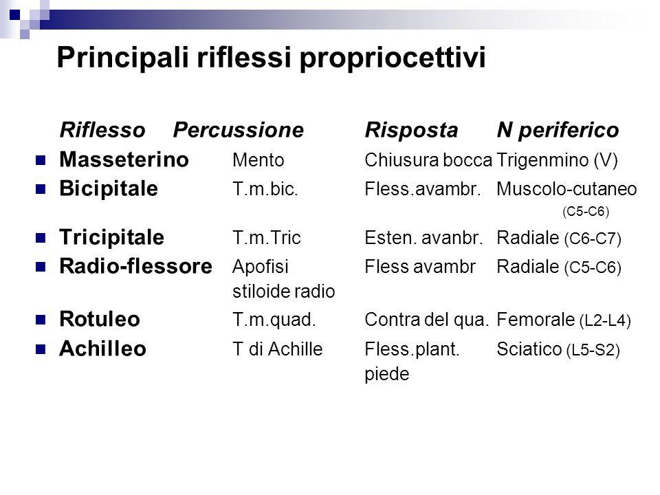 Principali riflessi propriocettivi Riflesso Percussione RispostaN periferico Masseterino MentoChiusura boccaTrigenmino (V) Bicipitale T.m.bic.Fless.av
