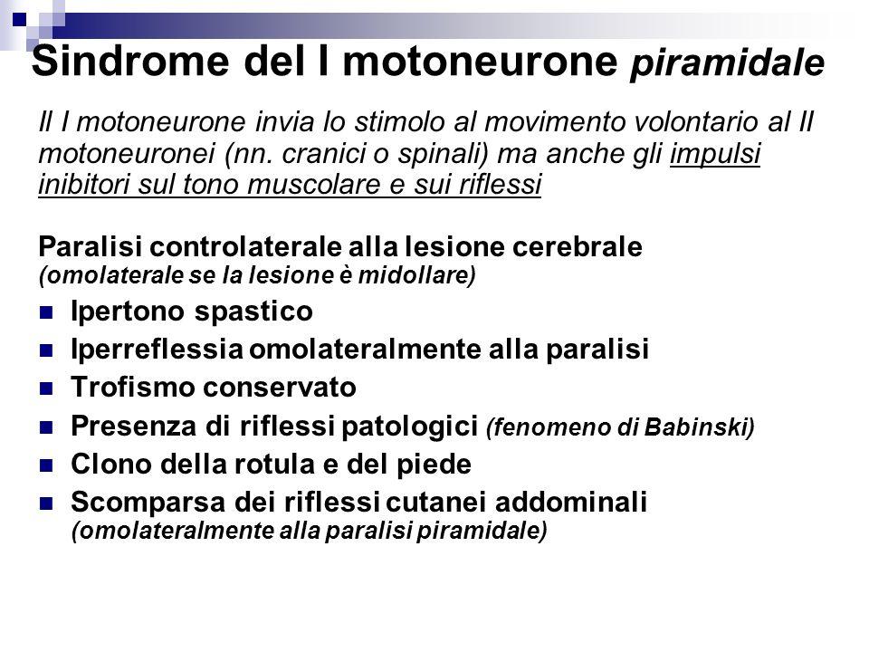 Sindrome del I motoneurone piramidale Il I motoneurone invia lo stimolo al movimento volontario al II motoneuronei (nn. cranici o spinali) ma anche gl