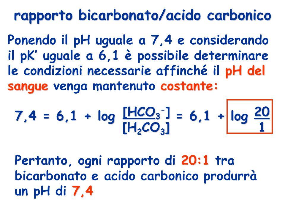 7,4 = 6,1 + log [HCO 3 - ] = 6,1 + log 20 [H 2 CO 3 ] 1 [H 2 CO 3 ] 1 pH del sanguecostante: Ponendo il pH uguale a 7,4 e considerando il pK uguale a