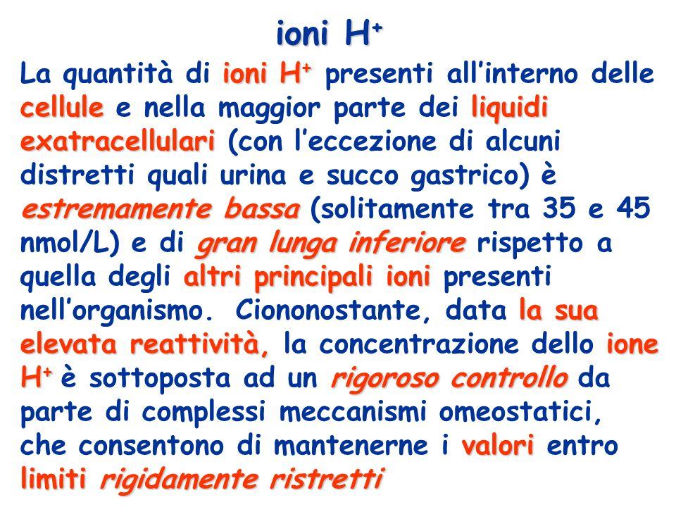 concentrazione fisiologica nel plasma dello ione H + in confronto a quella degli altri più importanti ioni presenti nellorganismo sodio (Na + ) 145.000.000 cloro (Cl - )95.000.000 bicarbonato (HCO 3 - )24.000.000 potassio (K + )4.500.000 calcio (Ca ++ )2.500.000 magnesio (Mg ++ )1.000.000 idrogeno (H + )40 ione concentrazione nmol (1 x 10 -9 mol) / L La concentrazione degli ioni idrogeno è circa tre milioni di volte più basa di quella degli ionio sodio e centomila volte più bassa di quella degli ioni potassio