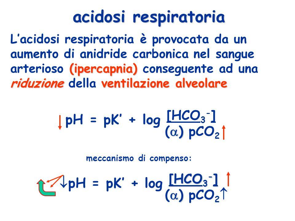 (ipercapnia) riduzioneventilazione alveolare Lacidosi respiratoria è provocata da un aumento di anidride carbonica nel sangue arterioso (ipercapnia) c
