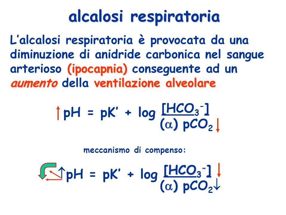 alcalosi respiratoria (ipocapnia) aumentoventilazione alveolare Lalcalosi respiratoria è provocata da una diminuzione di anidride carbonica nel sangue