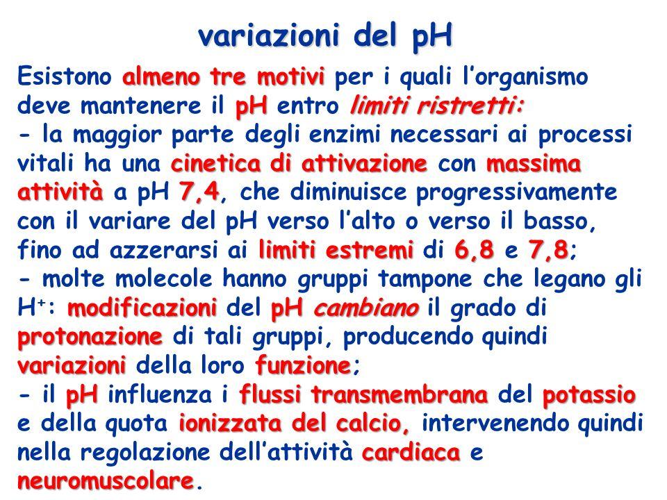 variazioni del pH almeno tre motivi pHlimiti ristretti: Esistono almeno tre motivi per i quali lorganismo deve mantenere il pH entro limiti ristretti: