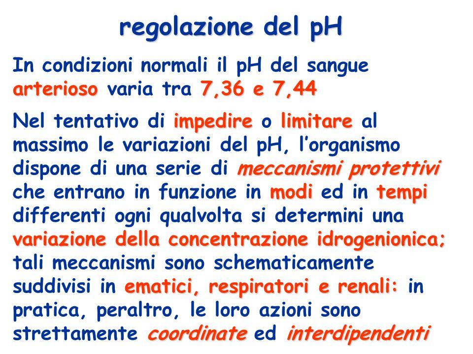 regolazione del pH impedirelimitare meccanismi protettivi moditempi variazione della concentrazione idrogenionica; ematici, respiratori e renali: coor