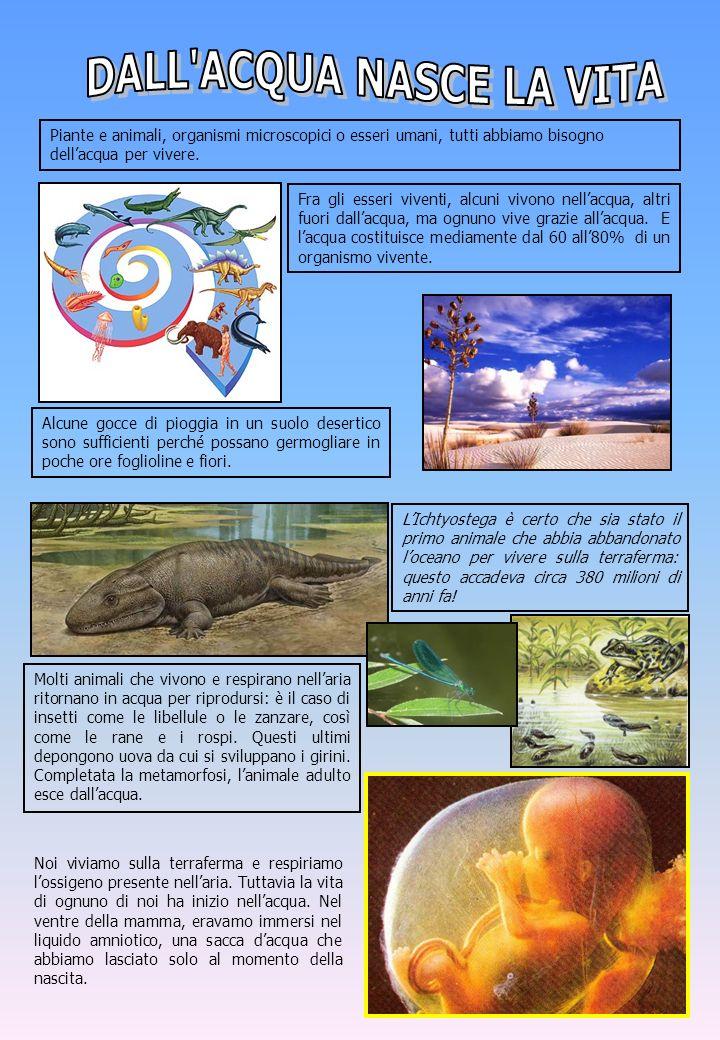 Piante e animali, organismi microscopici o esseri umani, tutti abbiamo bisogno dellacqua per vivere. Fra gli esseri viventi, alcuni vivono nellacqua,