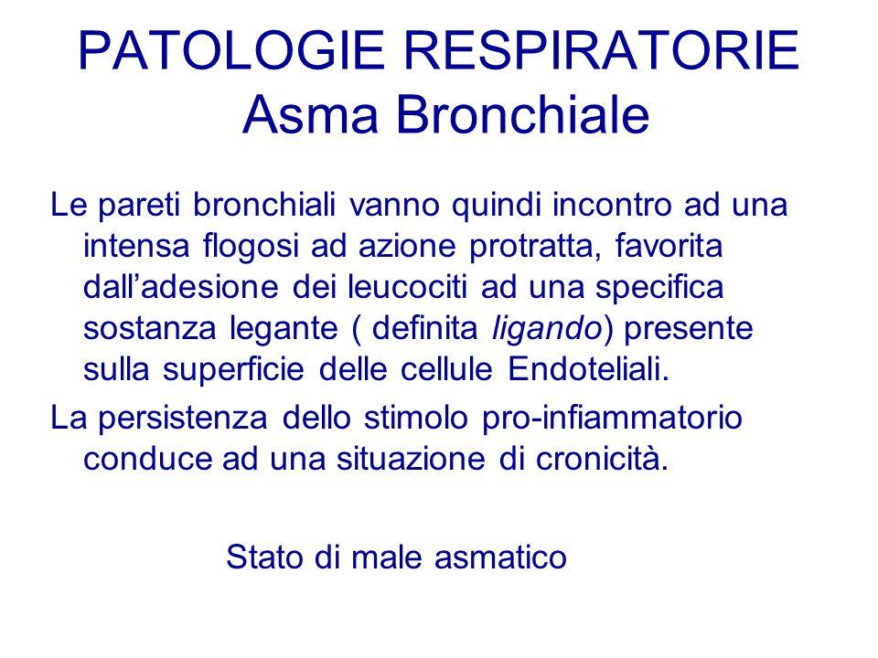 Le pareti bronchiali vanno quindi incontro ad una intensa flogosi ad azione protratta, favorita dalladesione dei leucociti ad una specifica sostanza l
