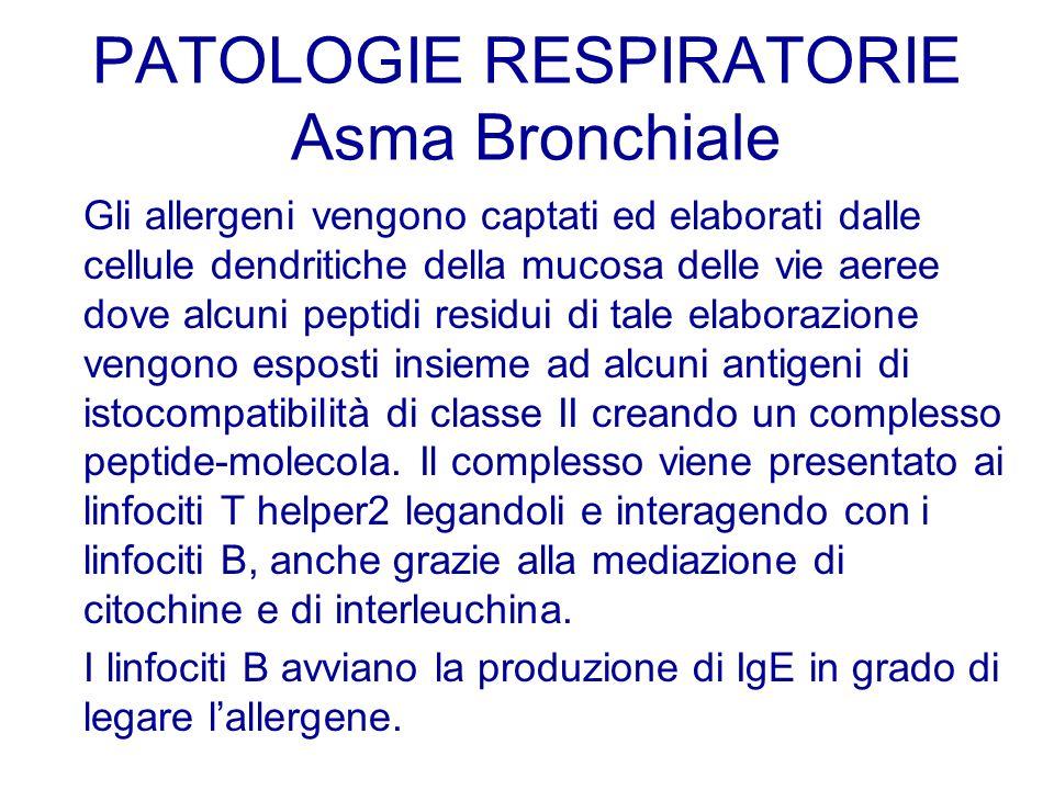 Gli allergeni vengono captati ed elaborati dalle cellule dendritiche della mucosa delle vie aeree dove alcuni peptidi residui di tale elaborazione ven