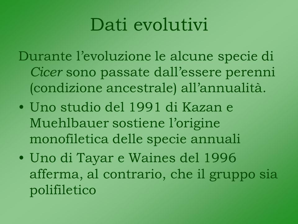 Dati evolutivi Durante levoluzione le alcune specie di Cicer sono passate dallessere perenni (condizione ancestrale) allannualità.